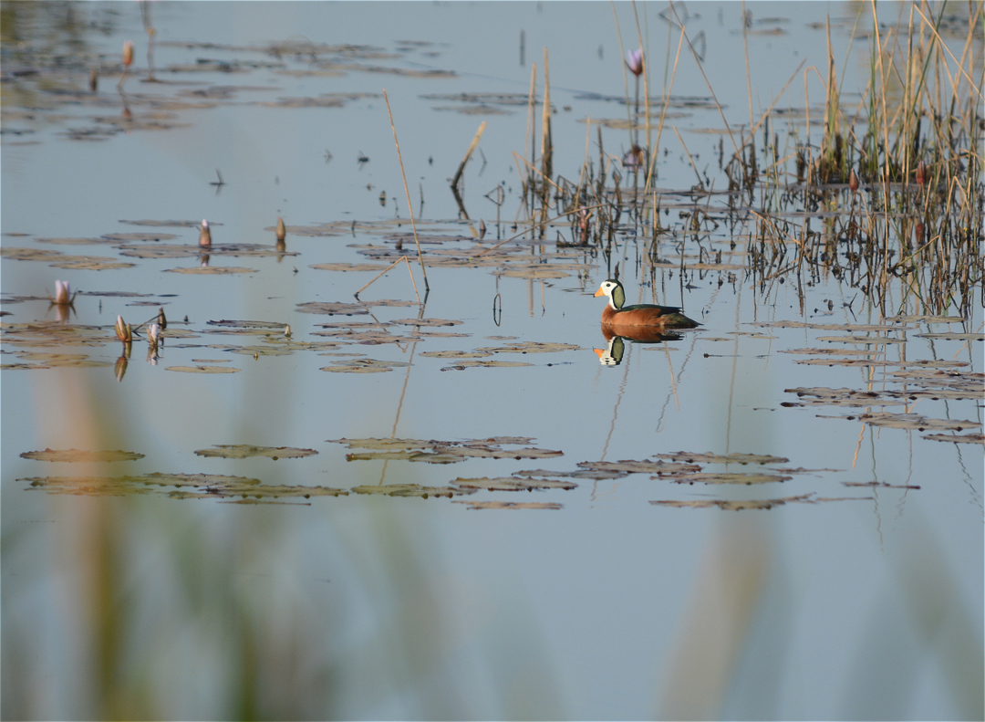Estampas viajeras: Parque Nacional de Diawling, al sur de Mauritania