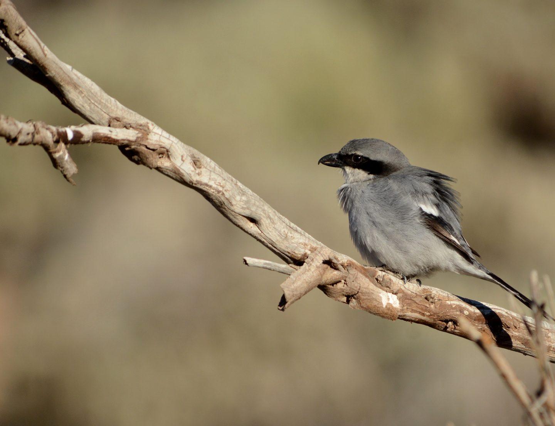 Observar aves en familia en la isla de Tenerife