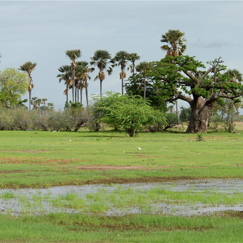 El Parque Nacional del Delta del Saloum. Senegal