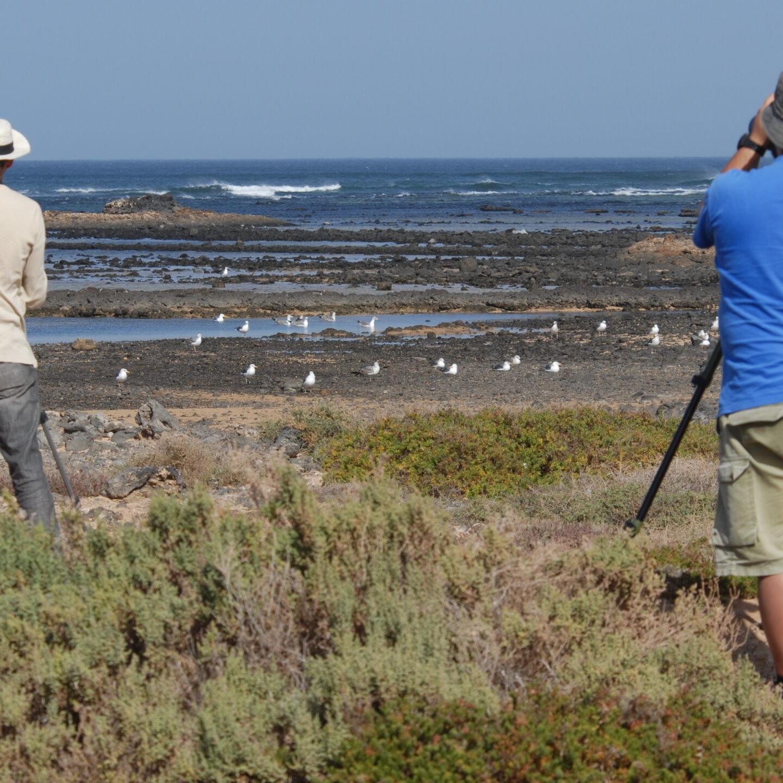 Donde y cuando observar aves en Fuerteventura