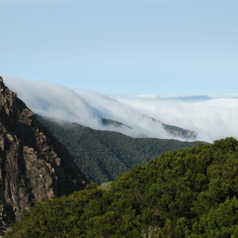 Parque Nacional de Garajonay en La Gomera
